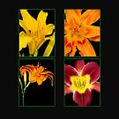 Daylily Extravaganza by Bonnie T.  Barry