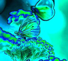 butterfly on verbena in blue by cuprum
