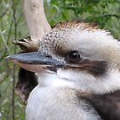 Kookaburra Eye by Keith Richardson