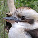 Kookaburra Eye by Keith Richardson