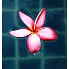 Frangipani by inspiredmemories