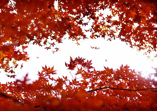 Momiji: Lake Ashinoko, Japan by Alfie Goodrich