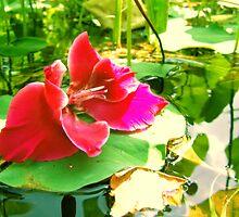 Water Beauty by snickerz28