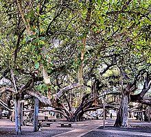 Banyan Tree by DJ Florek