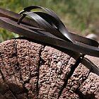 Flip Flops by KDPhotos