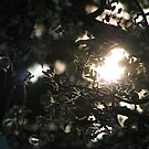 AppleBlossoms and the Setting Sun by gypsykatz