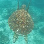 Sipadan Island - Giant Turtle by David Meyer