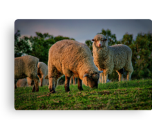 """The Call of the Shepherd"" Canvas Print"
