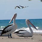 Pelicans at Theodolite Creek by Woodgate