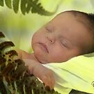 PEACE -fern baby dreams by picketty