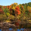 Autumn Beaver Pond Reflections by Georgia Mizuleva