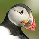 Puffins II    by Fiona MacNab / Orcadia Images by Fiona MacNab