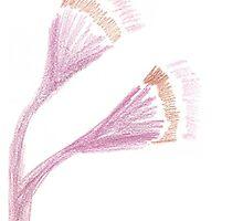 Flowering Gum - Inspired by KazM