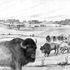Colorado Bison  - Charcoal by Gordon Pegler
