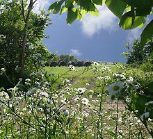 Prairie Wildflowers by Brian Fowler