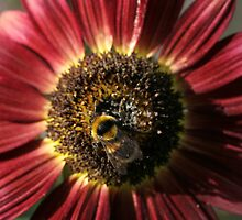 Bumble Bee Sunflower 3 by nerrad