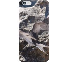 Tern Landing iPhone Case/Skin