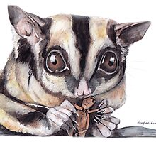 Sugar Glider by Meaghan Roberts
