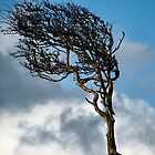 A Yorkshire Tree by celtes