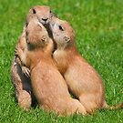 Hugging time..... by jdmphotography