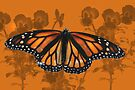 Monarch Butterfly by Kimberly Palmer