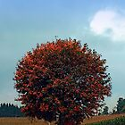 Blushing tree in shame | landscape photography by Patrick Jobst