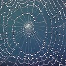 ~ Spider Webs ~ by Leeo