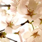 Plum Blossom Dreaming by supercamel