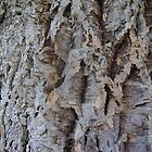 Cork Tree Bark by Ian McKenzie
