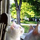 Bird Watching by hickerson