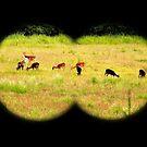 The Deer Stalker by Trevor Patterson