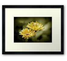 *A Touch of Pink* Framed Print