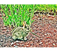 Spring Offspring 2 Photographic Print