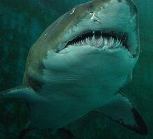 Shark - Pittsburgh Zoo & Aquarium by BLaskowsky