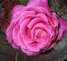 Rose in a Bowl by HELUA