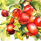 Red abundance by bettymmwong