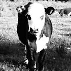 Black and White Cow by Elise03