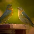 Visions of Bluebirds Danced in my Head . . . by Bonnie T.  Barry