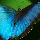 Butterfly No. 12, May 2008 by wonderfulworld
