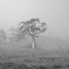 Tall Tree in fog  by Matthew  Smith