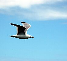 THE GREAT BLACK BACKED GULL by pablotguerrero