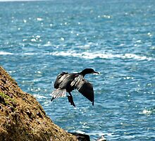 The Flight of the Great Cormorant by pablotguerrero