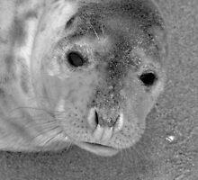 Wide Eyes by Wrigglefish