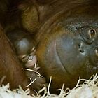 Gorilla with Baby by RachelB