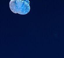 aquarium by kenndraahh