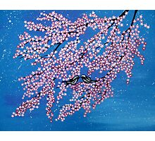 Love among the cherry blossoms Photographic Print
