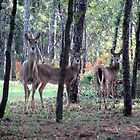 Oh! Deer. It's Autumn! by Paul Gitto