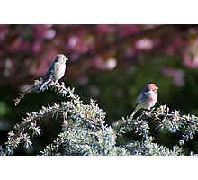 Meet the Finches Photographic Print