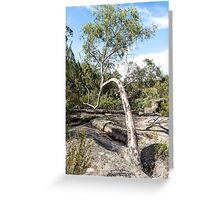 Curvature Gumtree Greeting Card