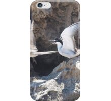 Tern Dispute iPhone Case/Skin